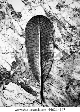 Black and White leaves on natural marble patterned  - stock photo