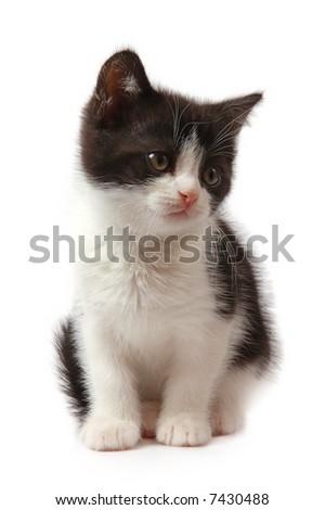 black and white little kitten - stock photo