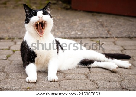 Black and white mixed-breed cat yawning widely and sleepily while lying on paving stones - stock photo