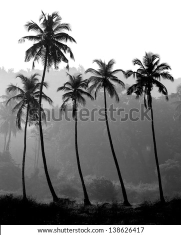 Black and white photo of palm trees silhouette, India - stock photo