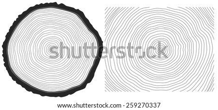 Black and white saw cut pine tree trunk and tree rings background - stock photo