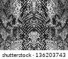 Black and white snake skin - stock photo