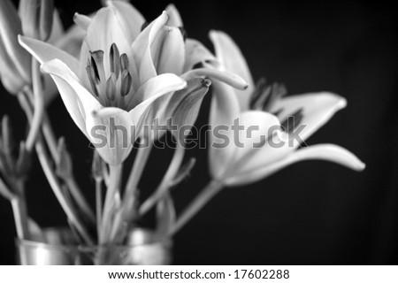 Black and white still life - stock photo