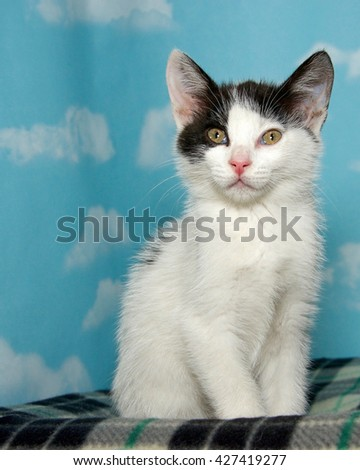 Black and white tabby kitten sitting on a checkered blanket blue background with clouds. Vertical presentation - stock photo