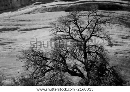black and white tree against rock wall - stock photo