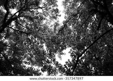Black and White tree background - stock photo