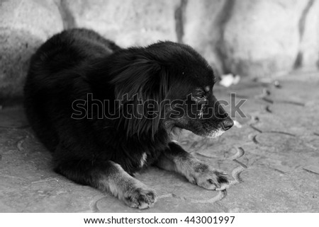 Black and white unhappy homeless dog lying on the asphalt - stock photo