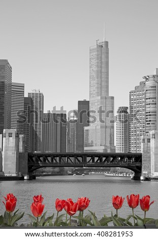 Black and white view of Chicago from the river with red tulips - stock photo