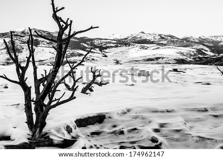 Black and White Winter Landscape - Yellowstone National Park  - stock photo