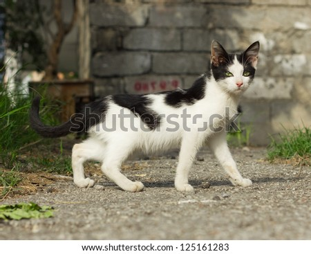 Black and white yard kitten outdoor - stock photo