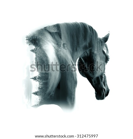 black arabian stallion portrait closeup against desert background double exposure - stock photo