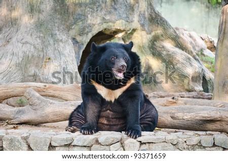 Black bear in the park. - stock photo
