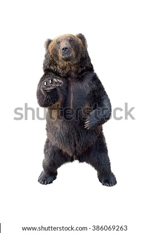 Black bear view of profile isolated on white background - stock photo