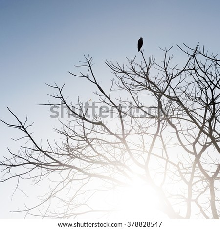 Black bird silhouette on bald dead tree in backlit on pale blue background - stock photo