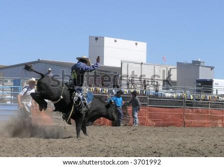 Black Bucking Bull - stock photo