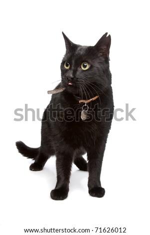 black cat - stock photo