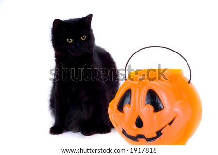 Black Cat and Candy Pumpkin. - stock photo