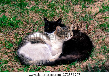 Black cat and white cat gray lie together on the green grass. - stock photo