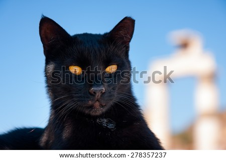 Black Cat dignified pose like an ancient God or sphinx - stock photo