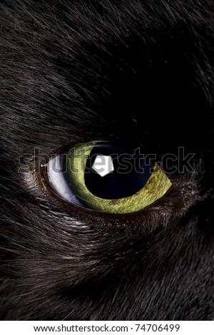 black cat eye wide open - stock photo
