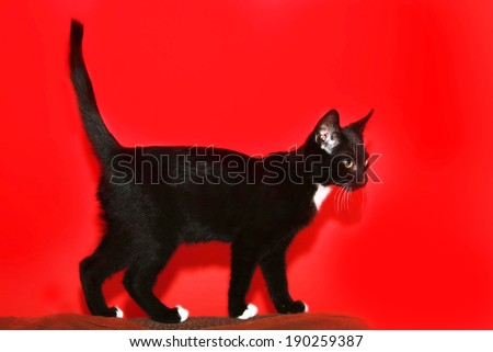 black cat front of red background - stock photo