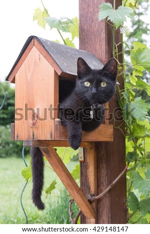 black cat holed up in a bird feeder - stock photo