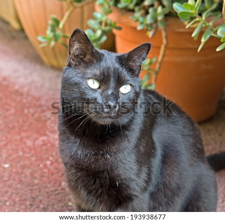 Black cat in the old district of Cannes. - stock photo