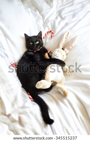 Black cat is hugging a stuffed animal with Christmas candy canes on the background. - stock photo