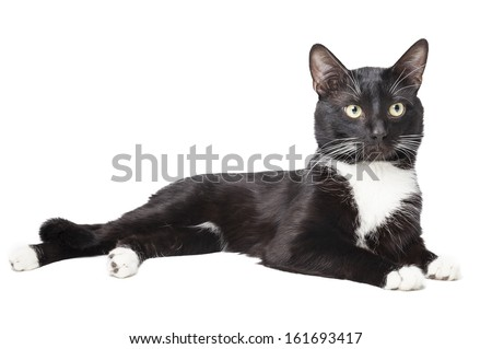 black cat isolated on a white background - stock photo