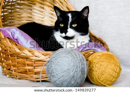 Black cat lying in a basket with purple pillow - stock photo