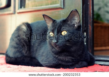 Black cat lying in front of the house - stock photo