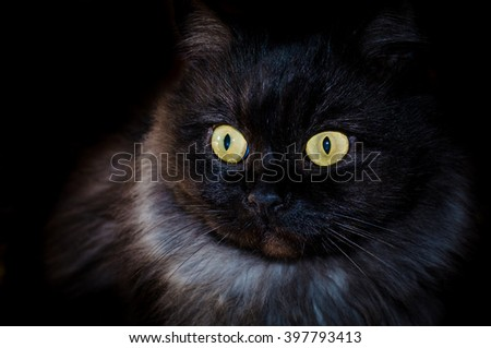 Black cat on black background with bright eyes - stock photo