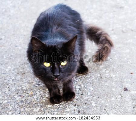 Black cat on gray background - stock photo