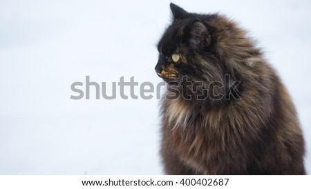 black cat on snow close-up with black hair - stock photo
