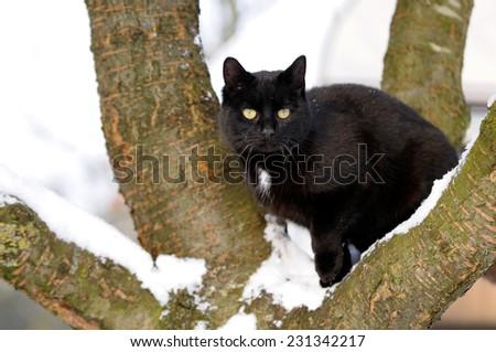 Black cat on tree in snow - stock photo