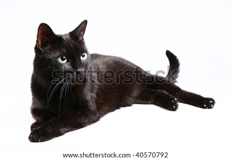Black cat on white background - stock photo