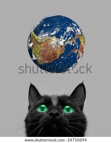 Black cat playing with earth planet on grey - stock photo