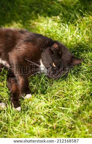 Black cat relaxing at sun rays on grass - stock photo