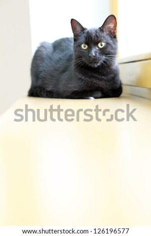 Black cat resting on a wooden windowsill in the house - stock photo
