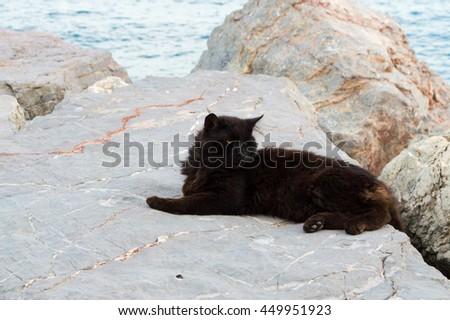 Black Cat Resting on the Rocks - stock photo