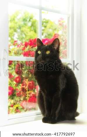 Black cat sitting at a white window with roses behind her, with a softening sunlight filter - stock photo