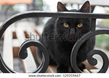 Black cat sitting on a bench in the park looking at the camera - stock photo