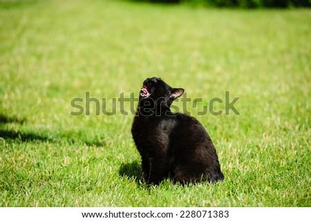 black cat  sitting on green grass - stock photo
