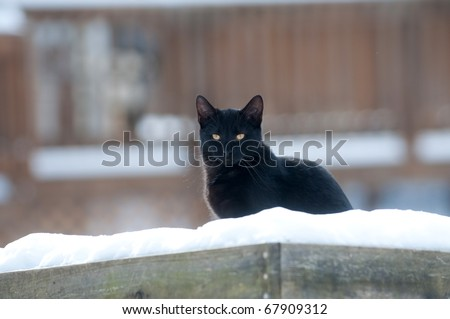 Black cat sitting outdoors in a bird feeder - stock photo