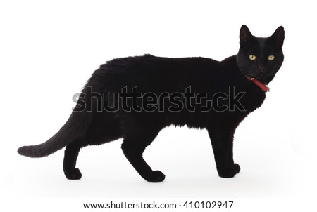 Black Cat standing and looking at the camera, isolated on white - stock photo