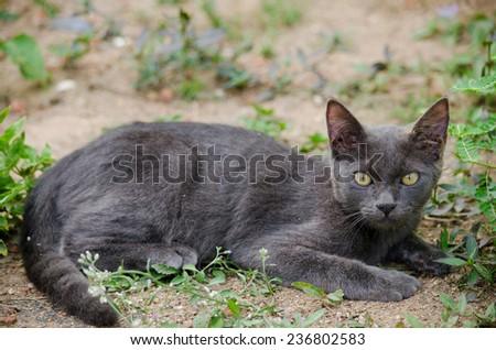 black cat thailand sleep on the ground - stock photo