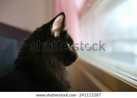 Black cat watching outside through a window - stock photo