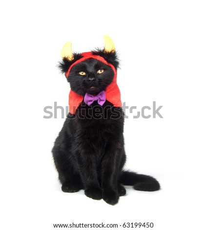 Black cat wearing devil horn at for Halloween on white background - stock photo