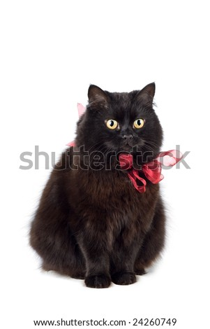 black cat wearing red bow isolated - stock photo