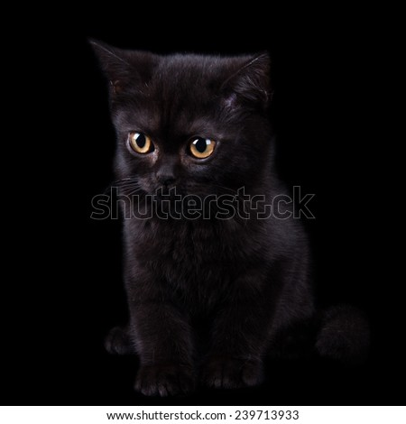 Black cat with brown eyes sitting on a black background and stares toward - stock photo